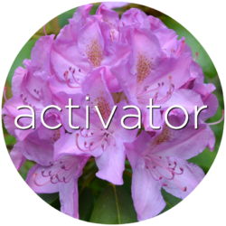 activator red clover flower essence
