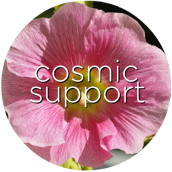 cosmic support hollyhock flower essence