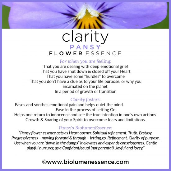 Clarity Pansy Flower Essence