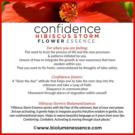 Confidence Hibiscus Storm Flower Essence