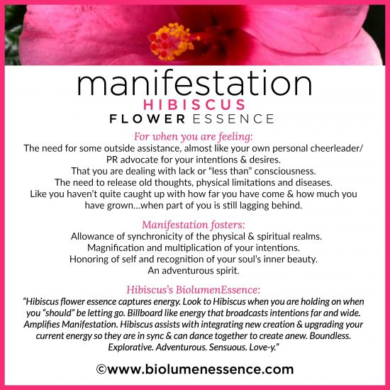 Manifestation Hibiscus Flower Essence