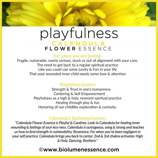 Playfulness Calendula Flower Essence