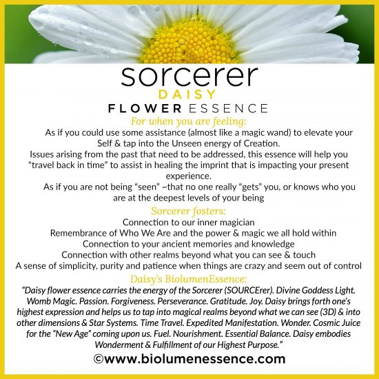 Sorcerer Daisy Flower Essence