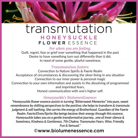 Transmutation Honeysuckle Flower Essence