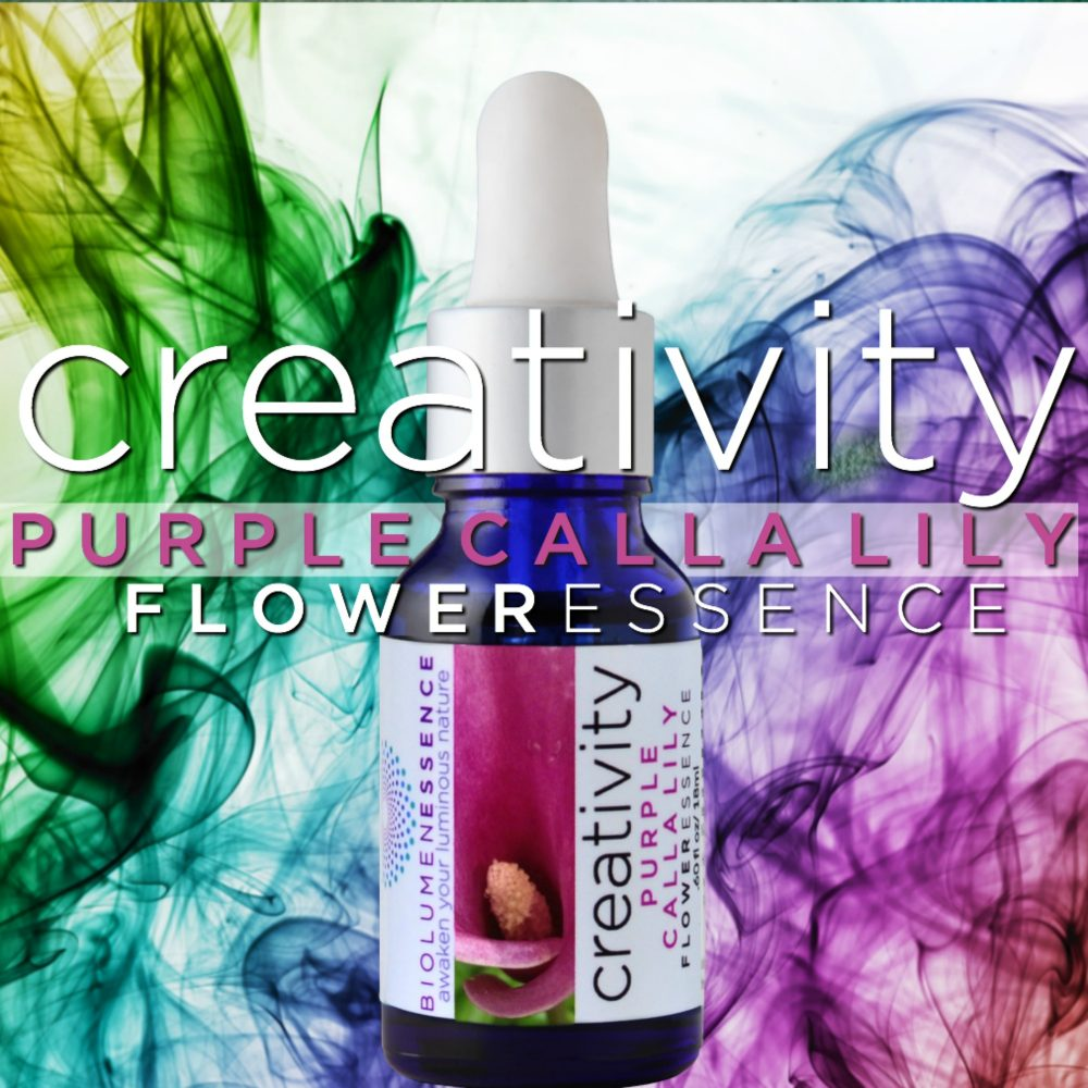 Creativity purple calla lily flower essence purple calla lily flower essence izmirmasajfo