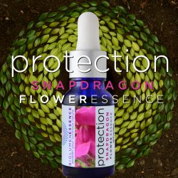 protection snapdragon flower essence