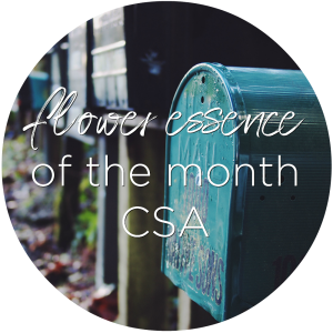 flower essence of the month