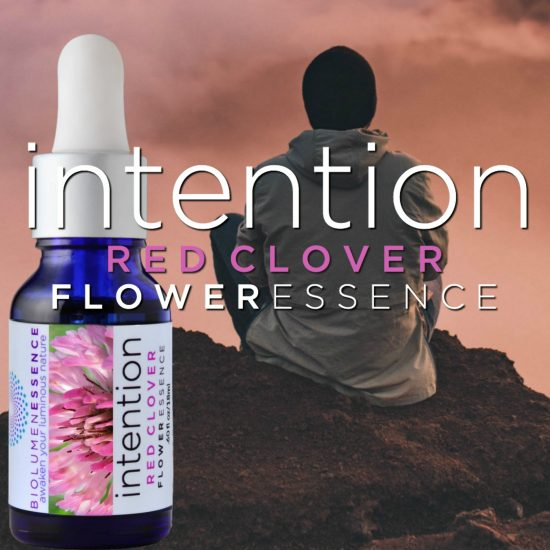 Integration Red Clover Flower Essence