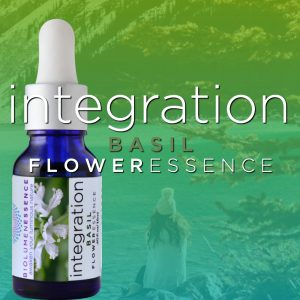 Integration Basil Flower Essence