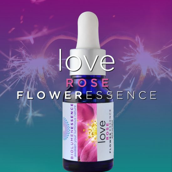 Love Rose Flower Essence