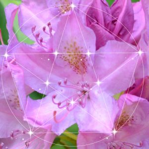 Rhododendron Sacred Geometry