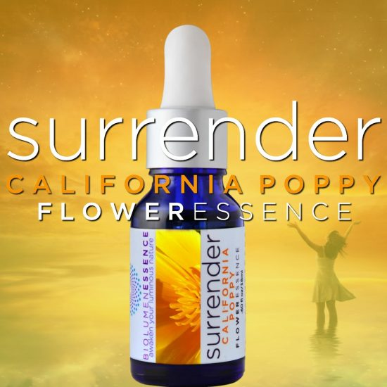 Surrender California Poppy Flower Essence