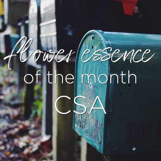 flower essence of the month CSA