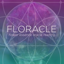 Flower Essence Oracle Reading